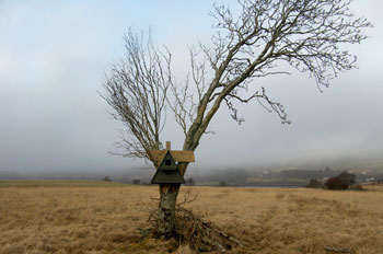 New Barn Owl box made by Neil                             Gallimore, in tree