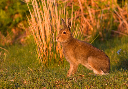 Hare taken by David Mitchell
