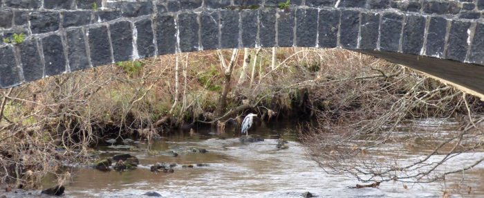 Heron under the                                               bridge at Aros