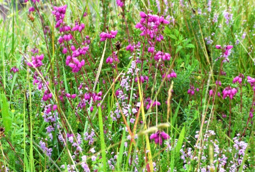 Ling Bell Heather