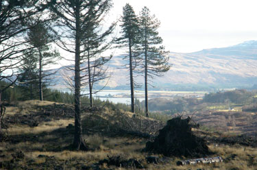 The sound of Mull from Aros                                       forest