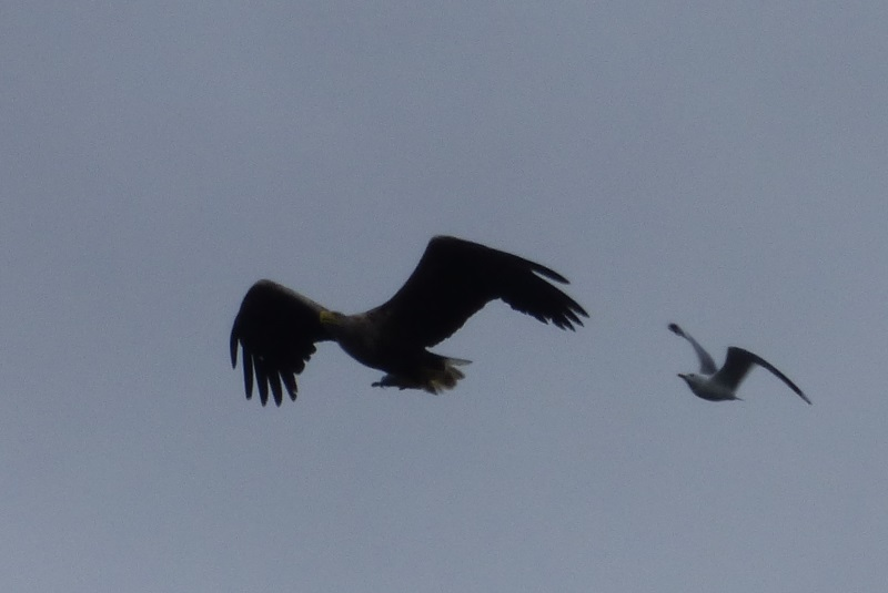 WTSE and Gull flying